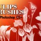 12 Tulip Flowers Photoshop Brushes