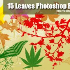15 Exclusive Leaves Photoshop Brushes