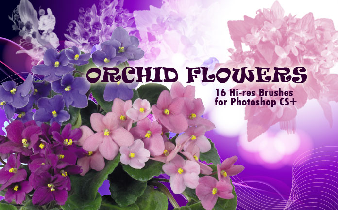 orchid flower Photoshop brushes