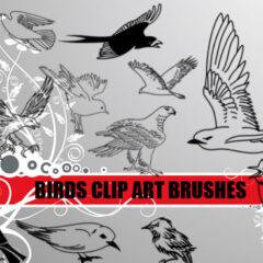 21 Bird Clip Art Photoshop Brushes