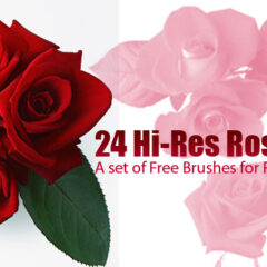 24 Super Large Rose Clip Art Photoshop Brushes