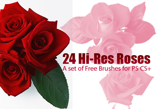 rose clip art Photoshop brushes