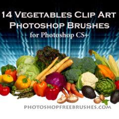14 Vegetable Clip Art Photoshop Brushes