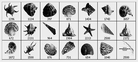 sea shells Photoshop brushes