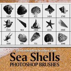 Sea Shells Free Photoshop Brushes
