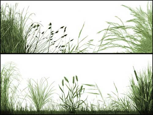 grasslands photoshop brushes
