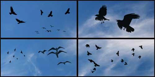 birds silhouette photoshop brushes