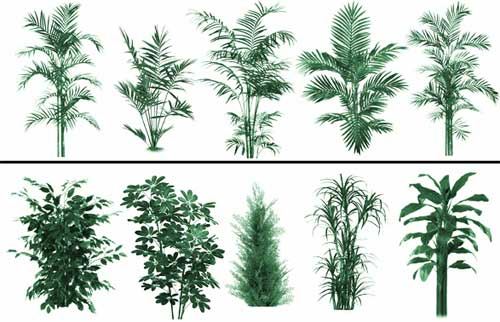 plant foliage photoshop brushes