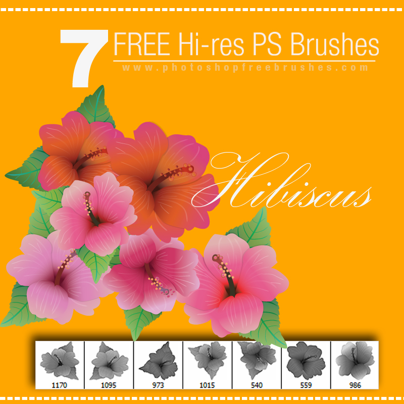 hibiscus-brushes-preview