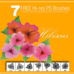 Hibiscus: 7 Hi-Res Tropical Flower Brushes for Photoshop
