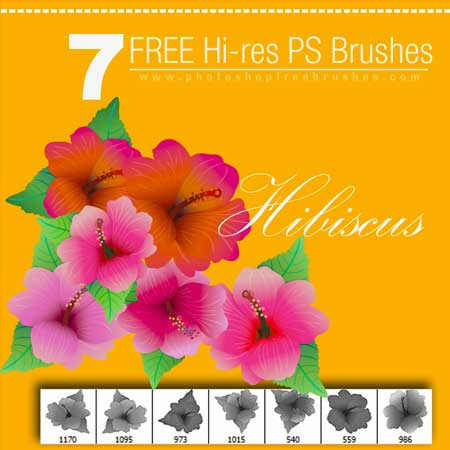 hibiscus-brushes