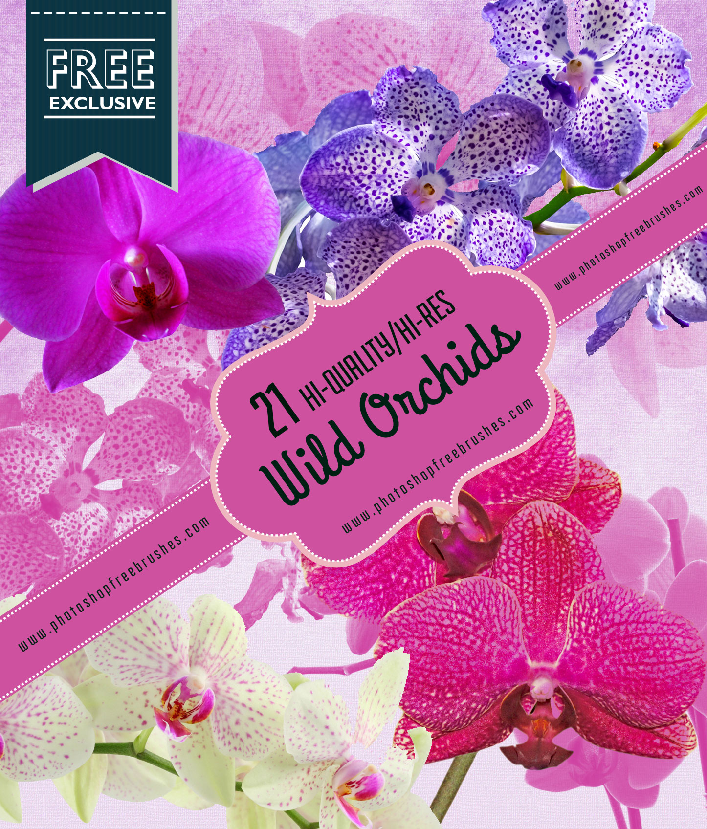 orchid-flower-brushes