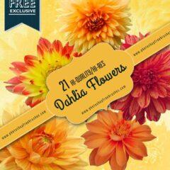 21 Tropical Dahlia Flower Photoshop Brushes