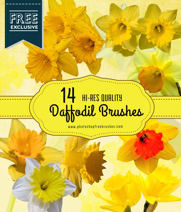 daffodil flower brushes