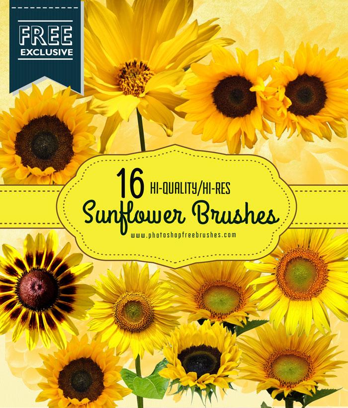 sunflower brushes