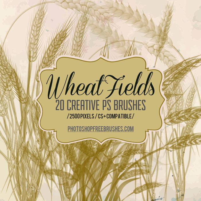 autumn wheat brushes