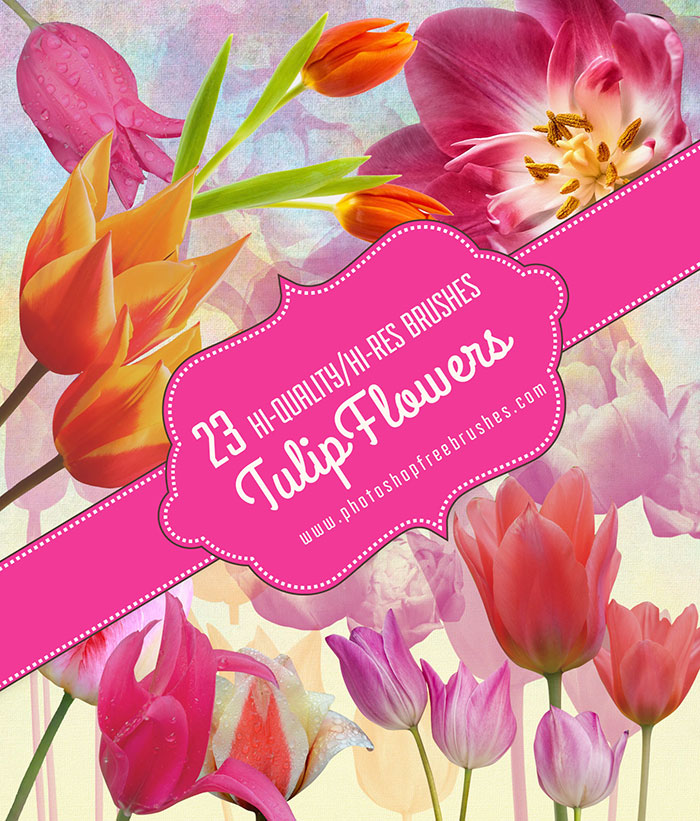 tulips flower brushes
