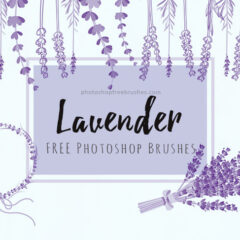 14 Free Lavender Flowers Brushes for Photoshop