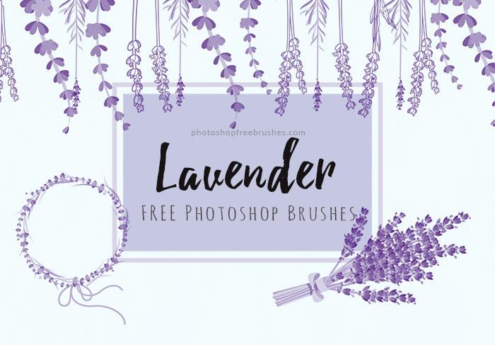 lavender flowers brushes
