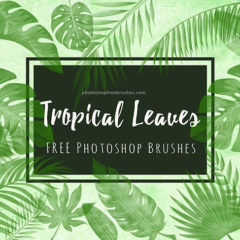 Tropical Leaves Photoshop Brushes for Your Summer Designs
