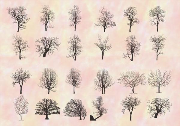 dead trees brushes