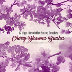 17 Decorative Cherry Blossoms Floral Photoshop Brushes