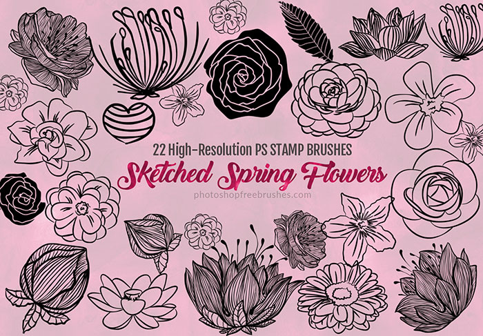 sketched spring flowers brushes