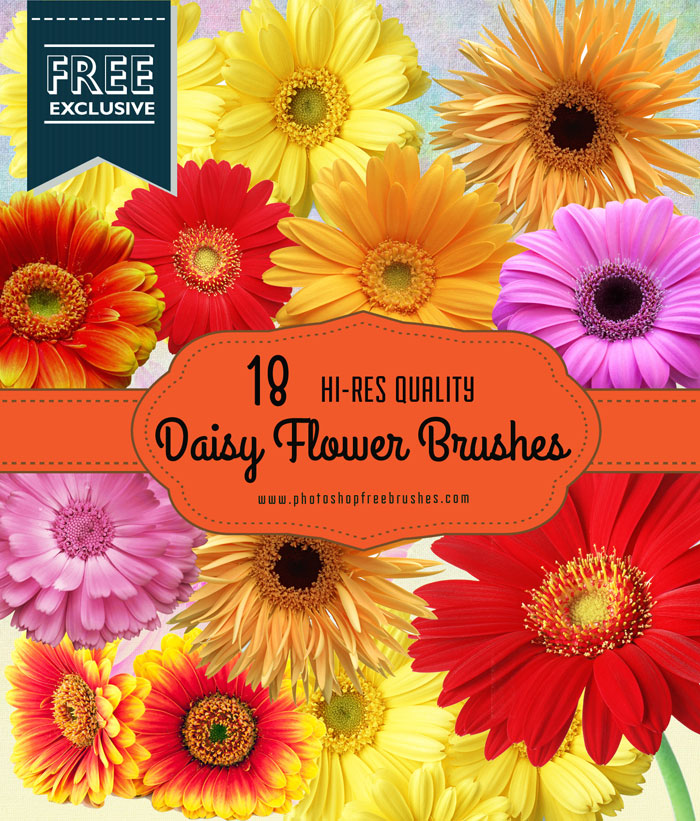 18 Daisy Flower Photoshop Brushes | PHOTOSHOP FREE BRUSHES